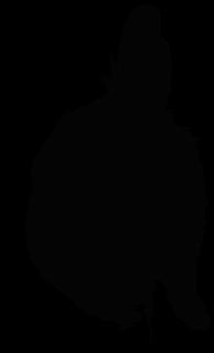 mokabuu