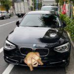【自動車購入】BMW 116i Sportってファミリーカーとしてぶっちゃけどうなの?